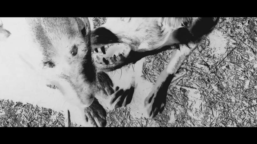 Grande Photo2 - Short Film#8 - Brut